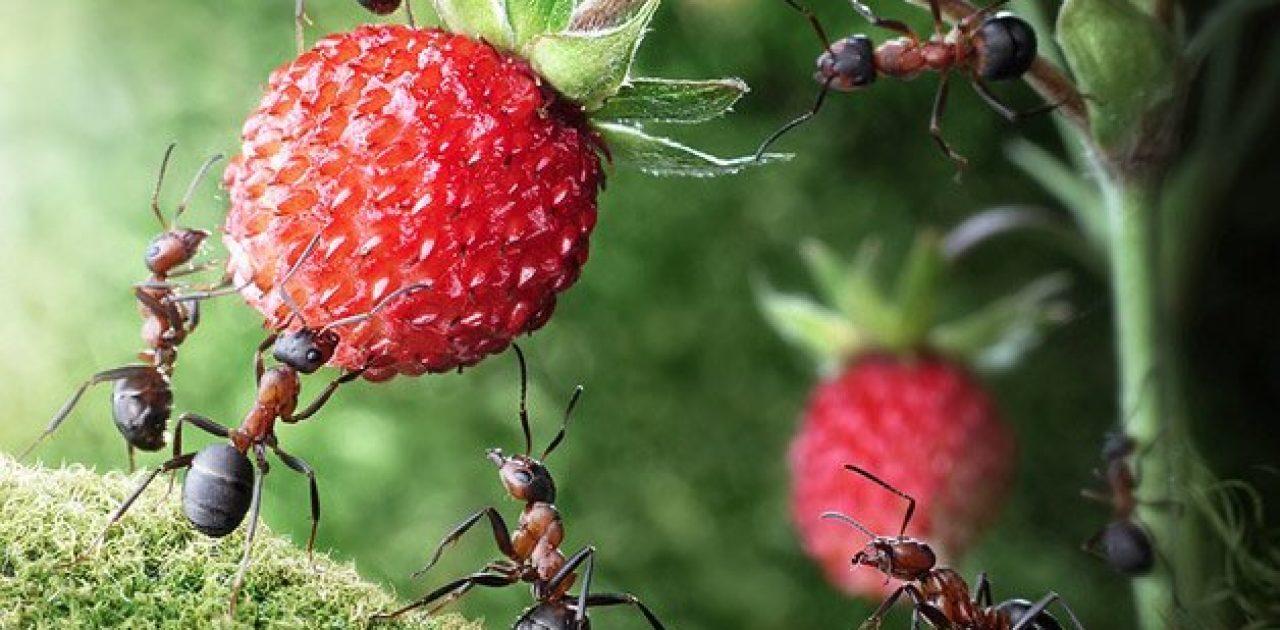 sociedade das formigas 01