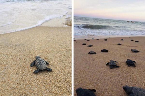 tartarugas no mar capa