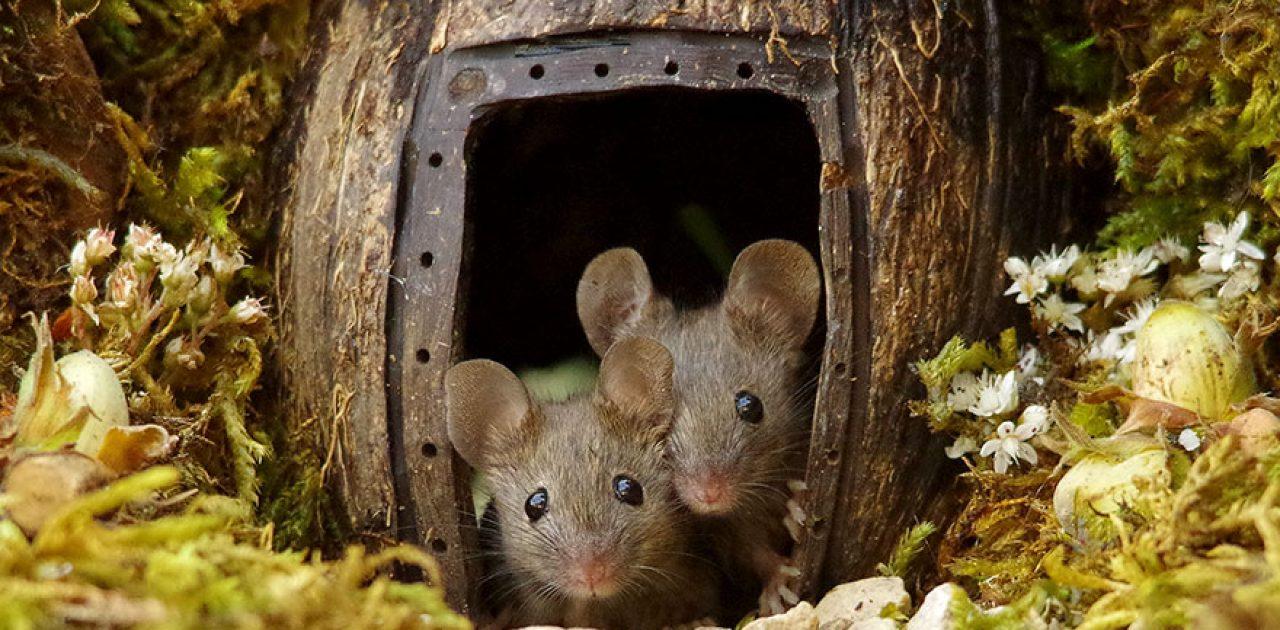 vila de ratos 01