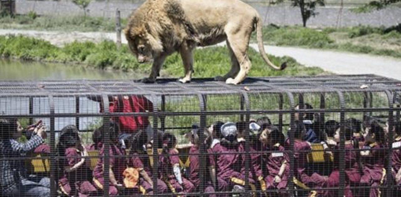 zoológico reverso capa